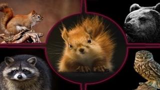 گزارشی از کلینیک تخصصی نگهداری از حیوانات وحشی