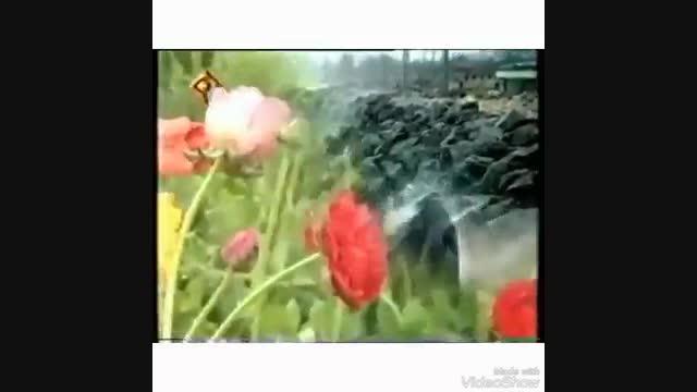 سرود گل گل گل گل اومد کدوم گل