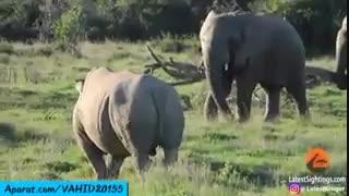 جنگ و نبرد دیدنی بین کرگردن و فیل غول پیکر