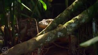 طبیعت زیبای کوستاریکا