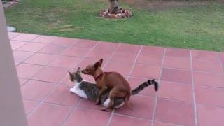 بازی بد جور سگ بی ادب با گربه (کلیپ رحمان)