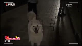 سگبازی بچهپولدارها در پاتوق شبانه