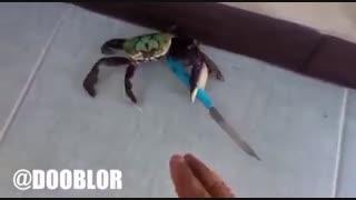 خرچنگ عصبی! خنده دار