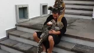 بچه داری به سبک گربه سانان بزرگ