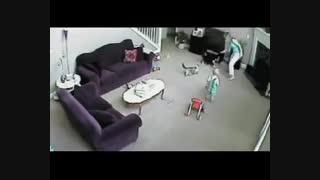 دفاع گربه از نوزاد کوچک
