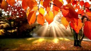 سپیده دم پاییز-آرمان آشنا