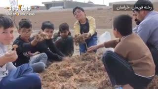 گزارشی از زعفران کاری در حیاط یک مدرسه درفریمان خراسان