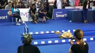 مسابقه سرعت بین خرگوش و لاک پشت